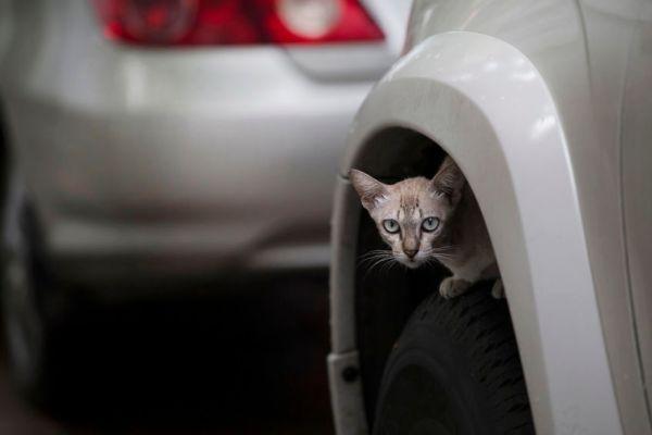 """180227cat 600x400 - 冬が過ぎ春になっても要""""猫バンバン""""、寒くなくても猫は隠れる"""