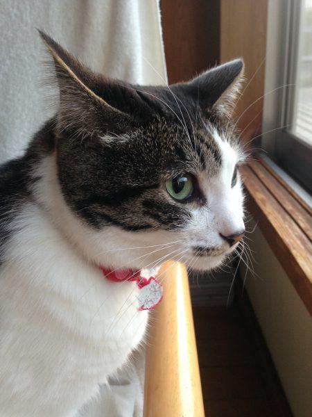 180321bijinneko01 e1521622645525 450x600 - 本日の美人猫vol.259