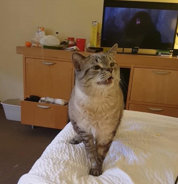 180428catsneeze 578x600 - ためにためて大きなくしゃみを決めた猫、新体操の技のように