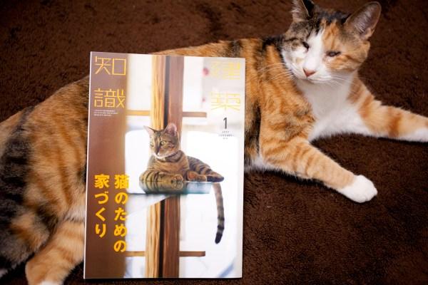 "180504AK IMG 8930 600x400 - 『建築知識』を変えた""猫特集""(上)〜ある猫の一生をも変えた決断"