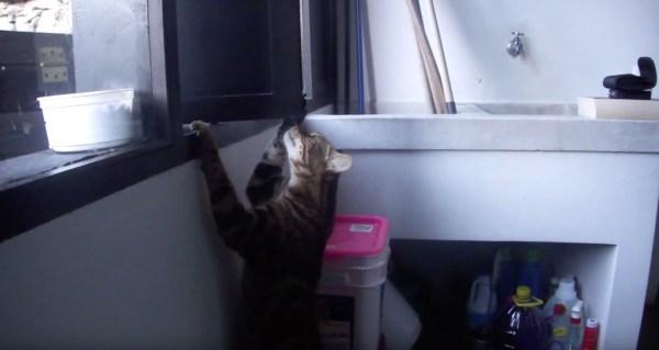 180521cats 1 600x319 - 自らの工夫と才気で窓開ける猫、賢き猫は後から便乗