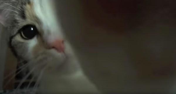 180610cat 600x320 - 喉鳴らし鼻息鳴らして迫る猫、猫占有率の高い動画に