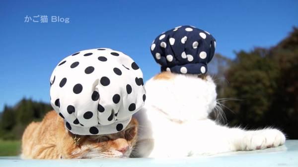 180626cat 600x338 - ZOZOスーツっぽい水玉模様の猫帽子、風に吹かれてコロリと転がる