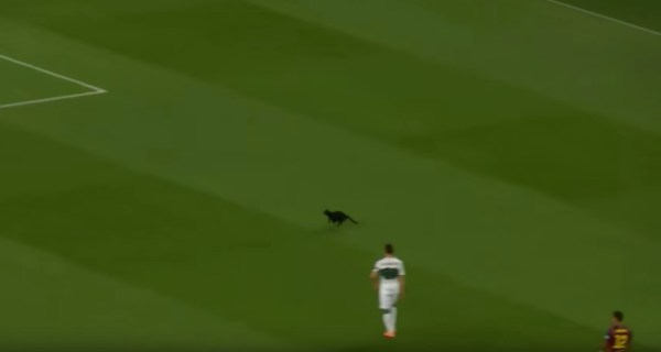 180628catsoccer 600x320 - 試合中のピッチに乱入黒い猫、退場時にも喝采を浴びる