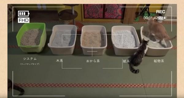 180702cat 600x320 - 5つの種類のトイレ砂ダービー、猫たちはどこを選ぶか実証実験