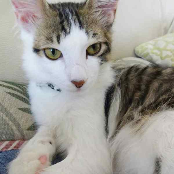 180707cat 600x600 - 本日の美人猫vol.274