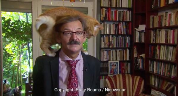 180710cat 600x324 - インタビュー中の主の肩に飛び乗る猫、よく見りゃまだいるあと2匹