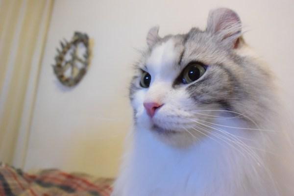 180728cat 1920 600x400 - 本日の美人猫vol.277