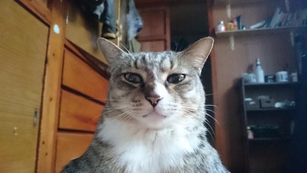 180811cat01 1920 600x338 - 本日の美人猫vol.279
