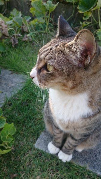 180811cat03 e1533948290409 338x600 - 本日の美人猫vol.279