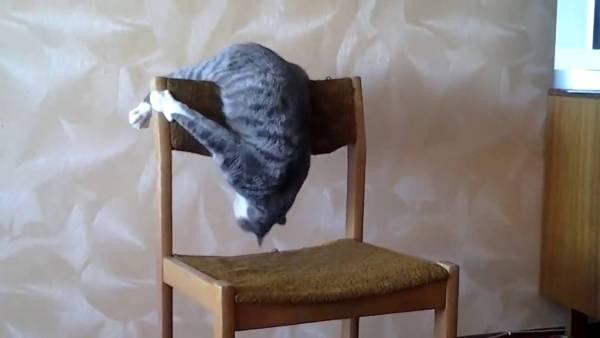 180823catAcrobat 600x338 - アクロバティック猫新体操、高難易度を連続で決める
