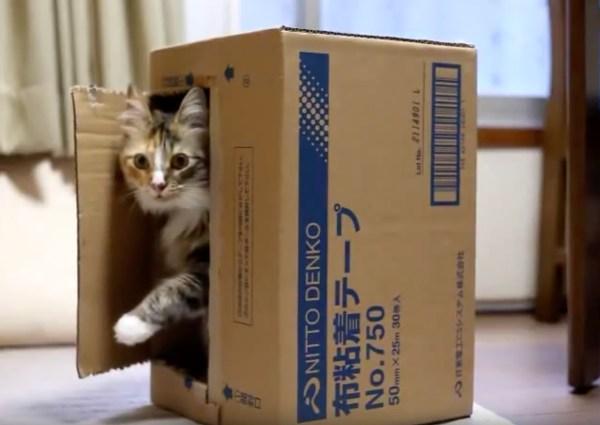 180829cat 600x425 - 猫段ボール工作のコペルニクス的転回、入るとこじゃなく出るとこを待ち伏せ