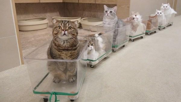 180930cattrain 600x338 - 運休の電車の代わりに走ってほしい、寛ぎ車両の猫トレイン