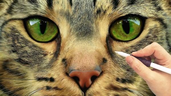 181104cat 600x338 - 目を奪われるその緻密さに、iPad ProとApple Pencilで描く猫の顔