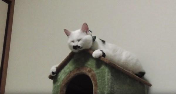 181112cat 600x320 - 鼻黒の白猫寝そべる屋根の上、しっくりハマって何かを彷彿