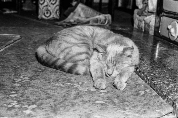 181124cat02 600x398 - 本日の美人猫vol.294