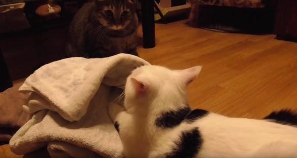 181125cat 600x319 - 洗濯物の頂上巡りて攻防する猫、取って取られてまた取って