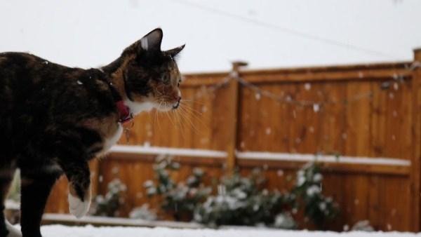 181213cat 600x338 - 冷たさを忘れてはしゃぐ三毛の猫、降る雪を追って飛んで遊んで