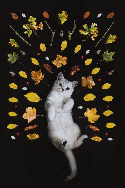 181215cat 400x600 - 本日の美人猫vol.297