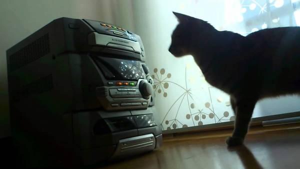 181216cat 600x338 - 懐かしのCDコンポと戦う猫、5CDチェンジャーに翻弄される