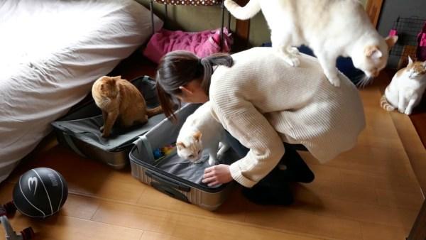 181222cat 600x338 - 4匹の猫が争う陣取り合戦、スーツケースと飼い主の手と