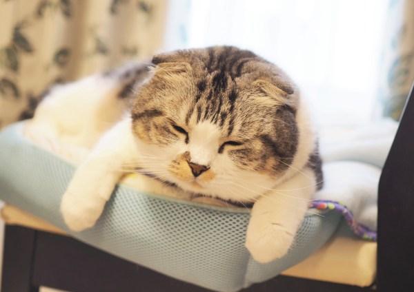 190124cat sub4 600x424 - 選りすぐりの猫の寝顔が大集合、名古屋栄三越で2月5日まで