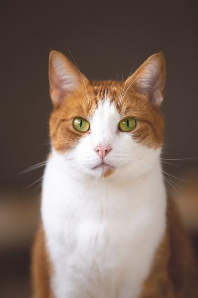 190201cat 400x600 - 本日の美人猫vol.304