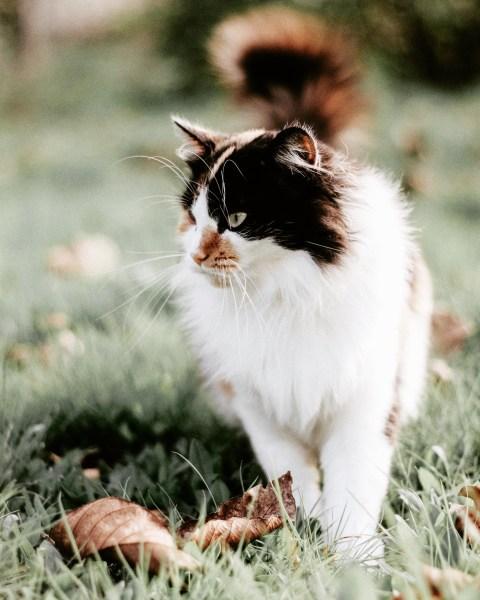 190301cat 2000 480x600 - 本日の美人猫vol.308