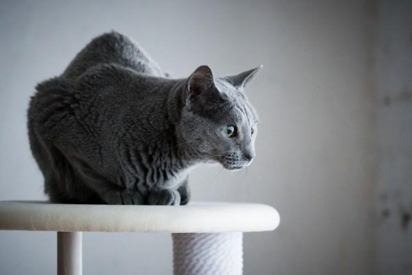 190329cat03 2000 600x400 - 雅致溢るるカリモク謹製キャットタワー、猫の姿も映え映えしく