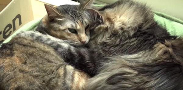 独り寝も添い寝もゴロ寝も駕籠寝でも、見てると眠たく猫の寝姿