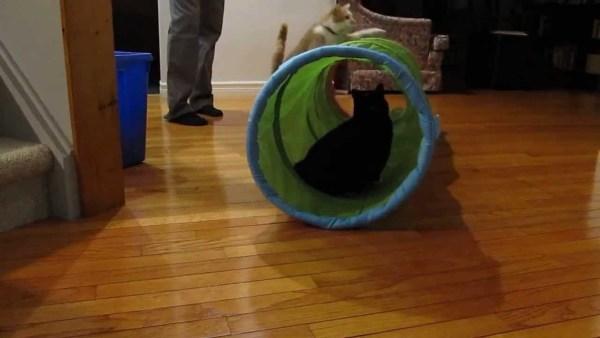 190727cat 1 600x338 - 外から中から享楽三昧、IKEAのプレイトンネルに夢中な猫たち