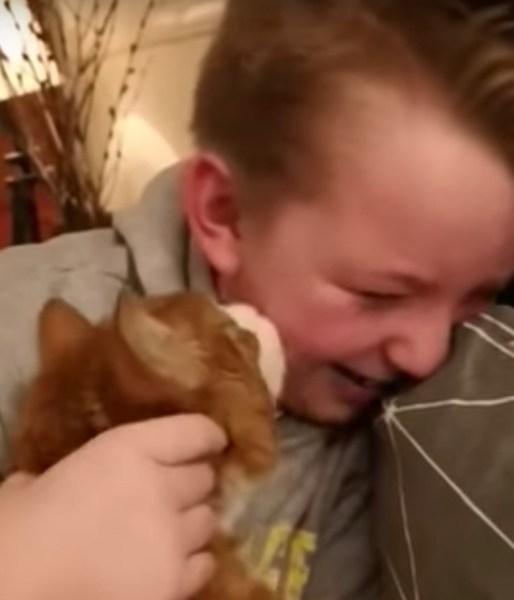 190801cat 514x600 - 7か月ぶりに飼い主と再会した猫、むせぶ男児の顔舐め慰む