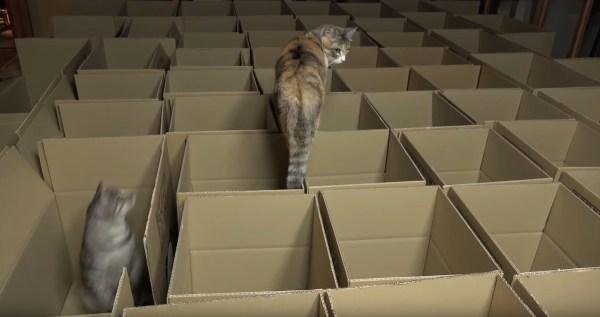 190822cat 600x317 - 段ボール箱で満たした部屋に大興奮、猫は遊ぶよ上から下から