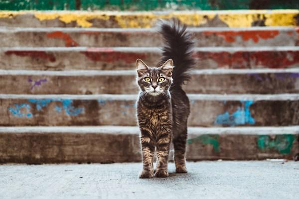 190913cat 1920 600x400 - 本日の美人猫vol.336