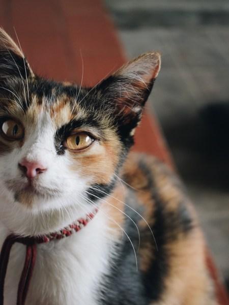 190927cat 1920 450x600 - 本日の美人猫vol.338
