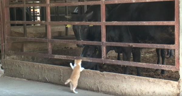 来年の干支の座占う攻防戦、子猫が狙うは因縁の鼻