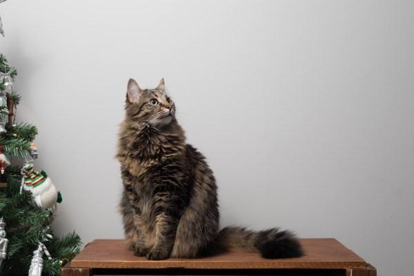 191206cat 1920 600x400 - 本日の美人猫vol.348