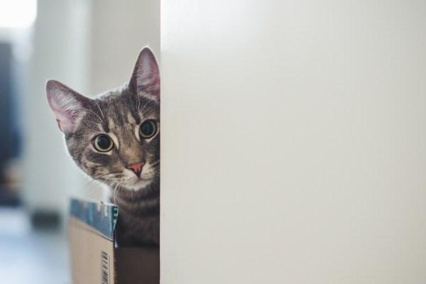 191220cat02 1920 600x400 - 本日の美人猫vol.350