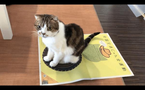 200222cat01 600x375 - 猫の事故防止の啓蒙黄色いポスター、専門家監修の猫ホイホイにも