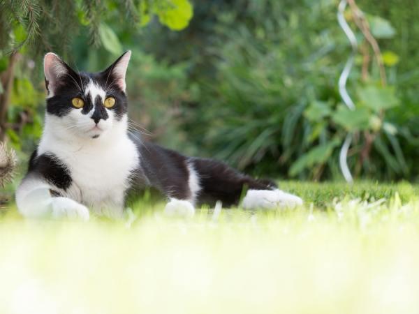 200319cat02 600x450 - 本日の美人猫vol.362