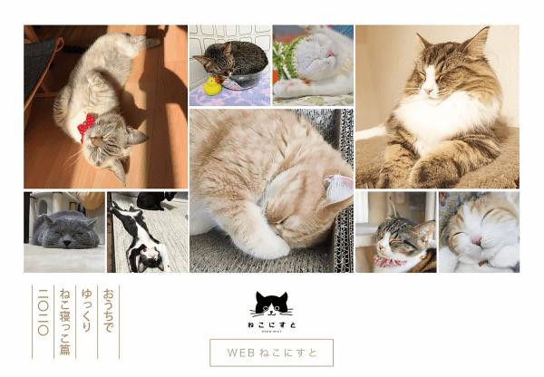 家にいながら猫の寝姿よりどりみどり、Webで開催猫写真展