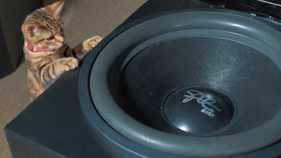 重低音の響きと調べが眠気を誘う、子猫の寝床はサブウーファー