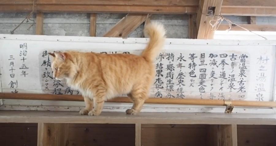 201025cat 1024x543 - 九州の温泉旅館の看板猫たち、看板覆って自己をアピール