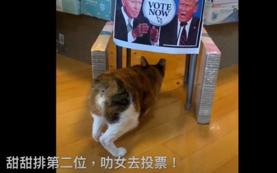 201103cat 1024x639 - 2020米大統領選大胆予想、5匹の猫の投票結果は