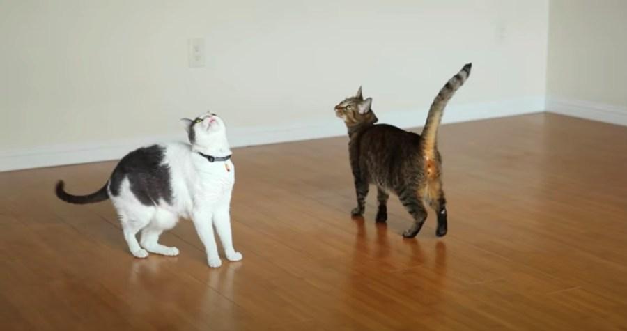 201107cat 1024x540 - 天井を眺めて猫はくるくるり、シーリングファンが猫オモチャ化