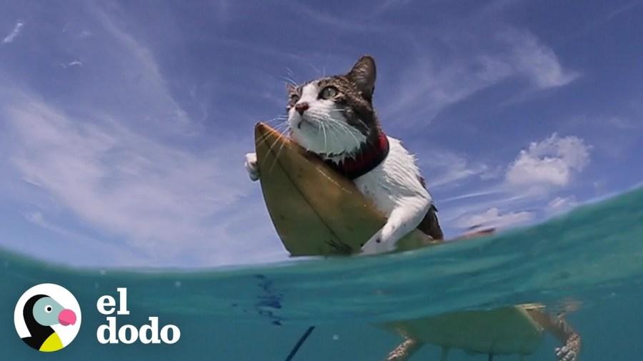 一年の幕開け祝う縁起物、波乗りこなす猫サーファー