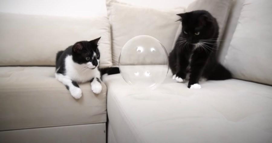 210117cat02 1024x540 - 真ん丸のシャボンの玉を初めて見た猫、両のお目々も真ん丸に