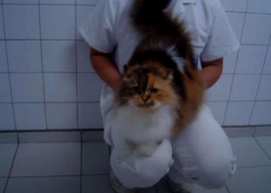 210301cat01 1024x731 - 人間と三毛猫互角のセッションバトル、尻を叩くと膝叩き返す