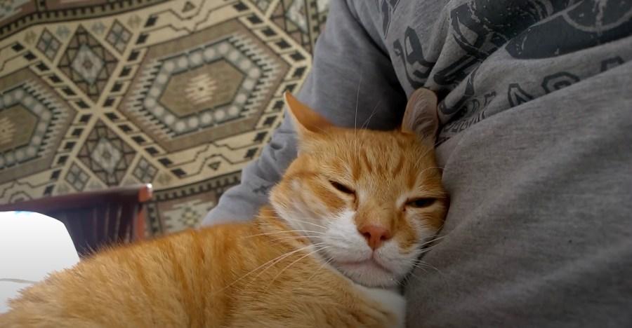 210323cat 1024x532 - 11の猫が伝える幸福サイン、あなたの猫が見せるのはどれ