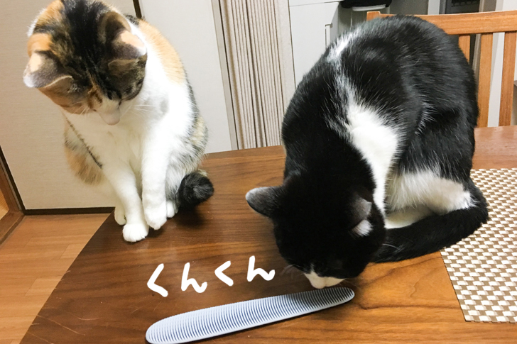 においをかぐ猫